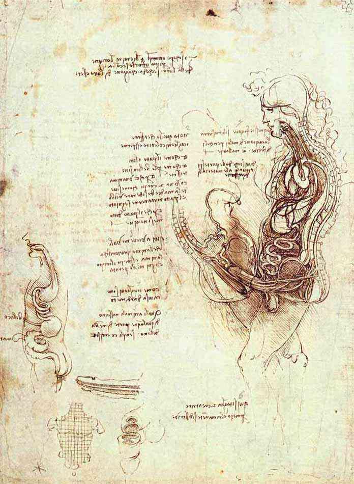 Leonardo da Vinci - Estudos do ato sexual e do órgão sexual masculino