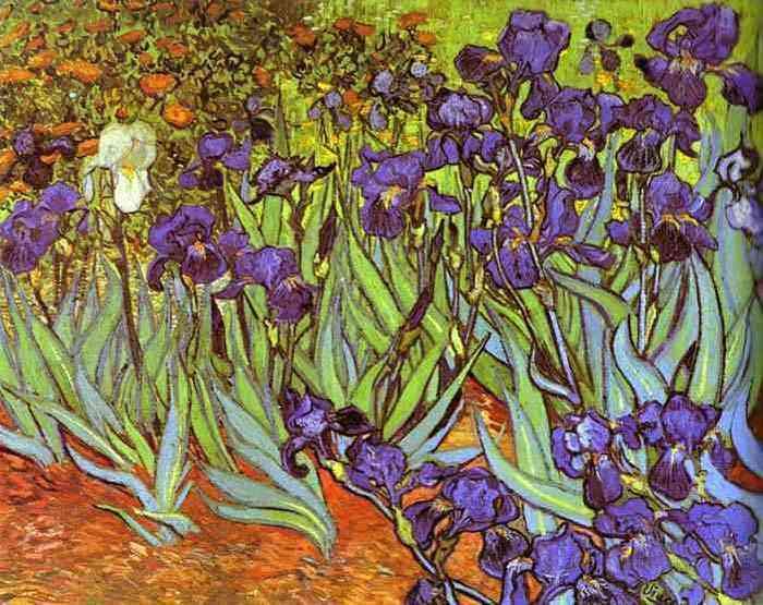 Vincent Van Gogh - Iris Saint Rémy